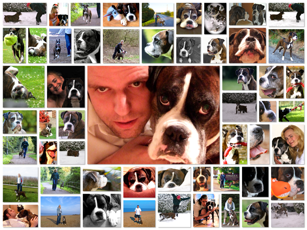 Bruce Collage