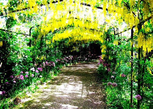 Flowers at Hampton Court Palace