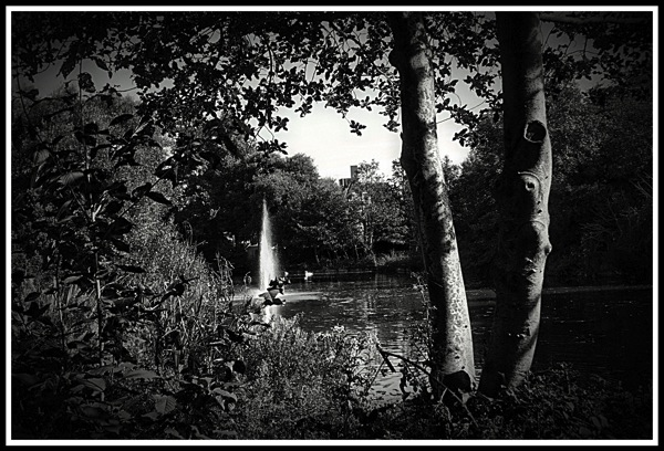A photo of Bourne Hall lake looking though the bushes with a tree on the right handside looking into the fountain