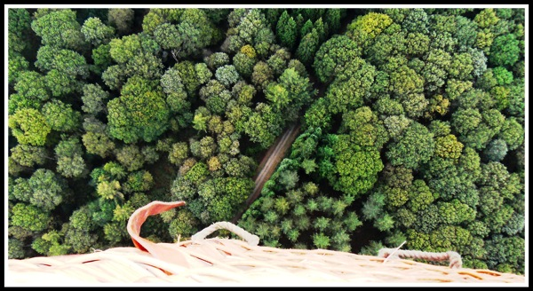 Looking directly down out of the hot air balloon basket onto what looks just like broccoli but they are actually trees!