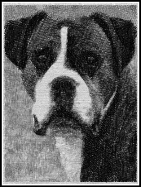 Bruce as a sketch