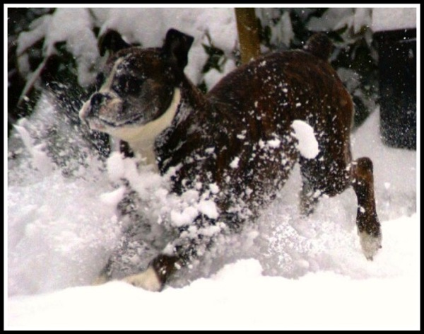 Bruce jumping in the snow and spraying snow everywhere!