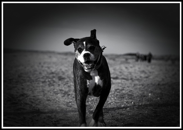 Bruce running towards the camera along Hunstanton beach.jpg