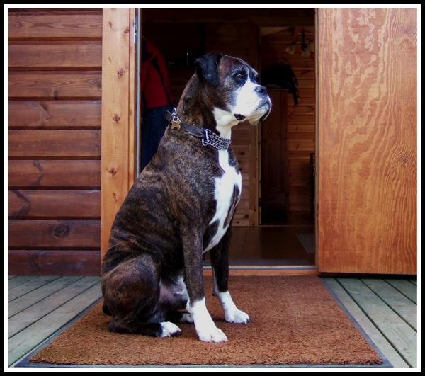 Bruce sitting on guard on the porch of the log cabin
