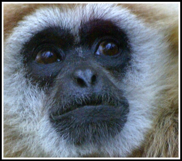 A close up portrait of a Monkeys face!