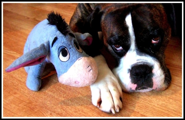 Bruce with his fluffy toy Eeyore