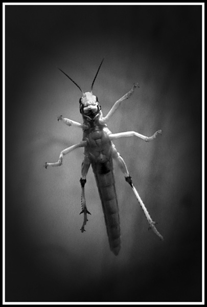 A photo of a smiling insect from underneath through a glass tank.