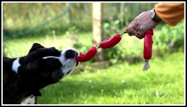 Bruce pulling on his plastic sausages from the left and Sarah's hand pulling from the right