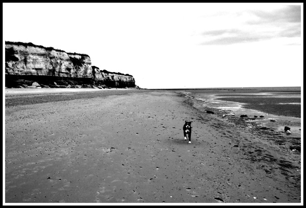 Bruce running alone on the beach