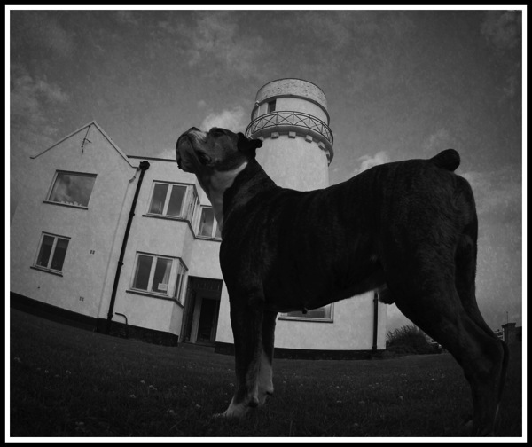 Photo of Bruce the boxer dog stood in front of the old hunstanton lighthouse.