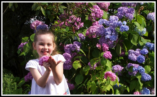 Ella stood with a flower in front of a huge bush of flowers!