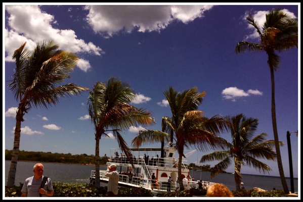 Paddle boats and palm trees
