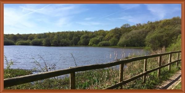 Big stew pond with fence