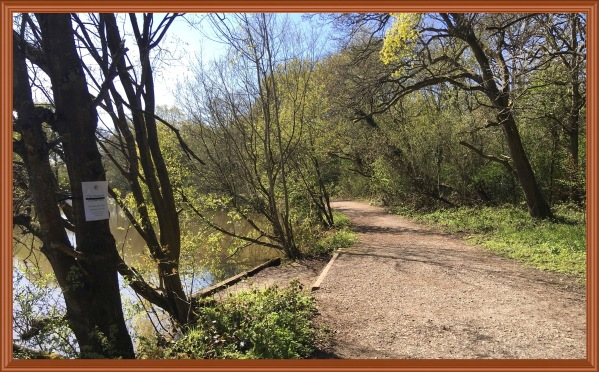 Photo of a gravel path leading through arching trees with a stew pond on the left