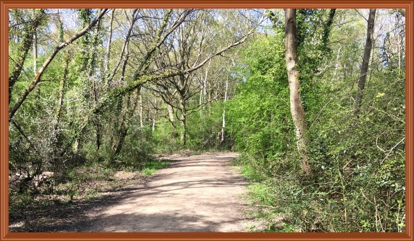 Local nature reserve woods 1