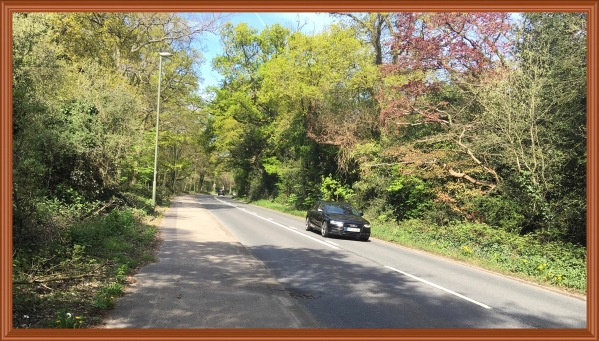 A photo taken from the pavement of the road lined with green trees and a black Audi on the road