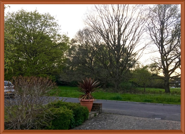 photo taken from my drive of the trees over the lane