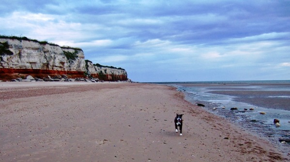 Bruce running towards us with the sea on the right, cliffs on the left and a big sandy beach which is empty in the centre