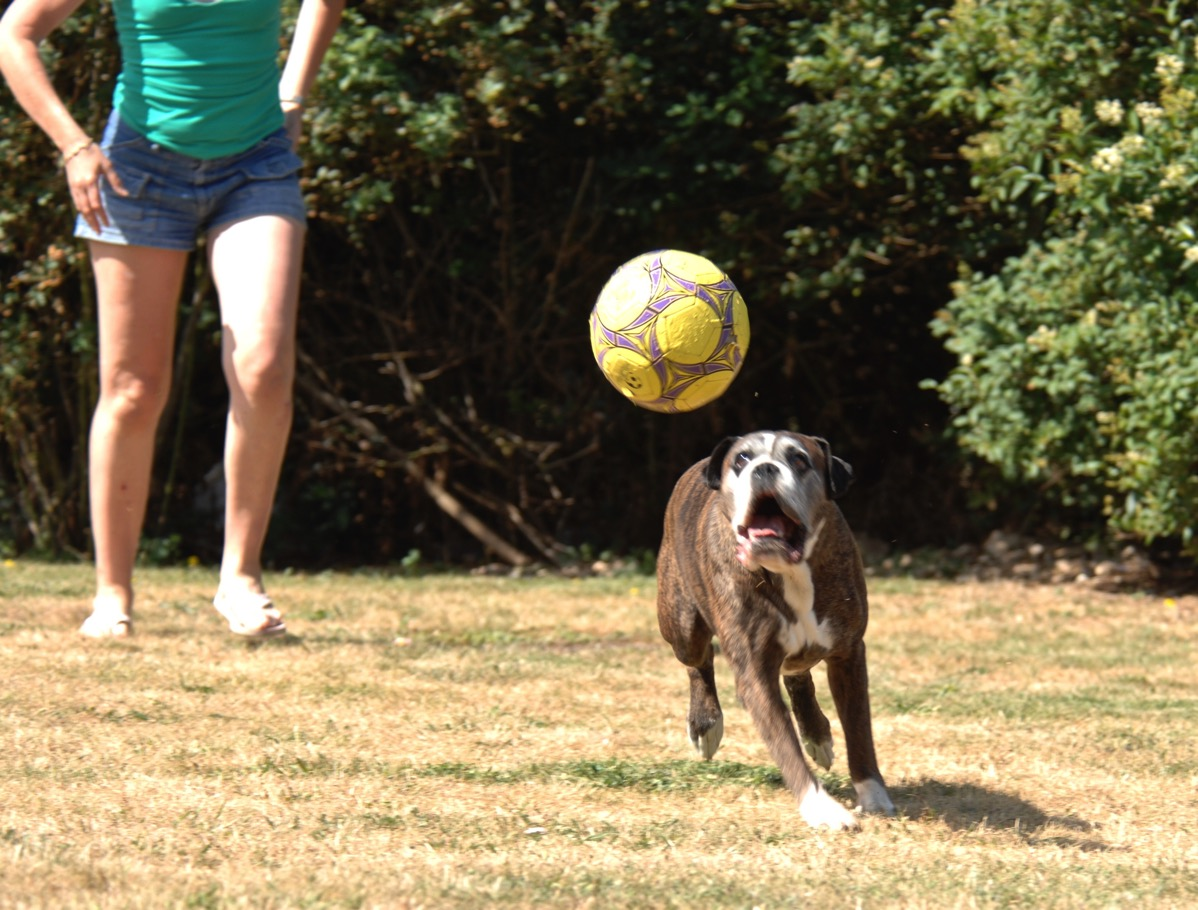Bruce running with a worried face trying to catch the ball just above his head. Sarahs legs are in the back left of the photo