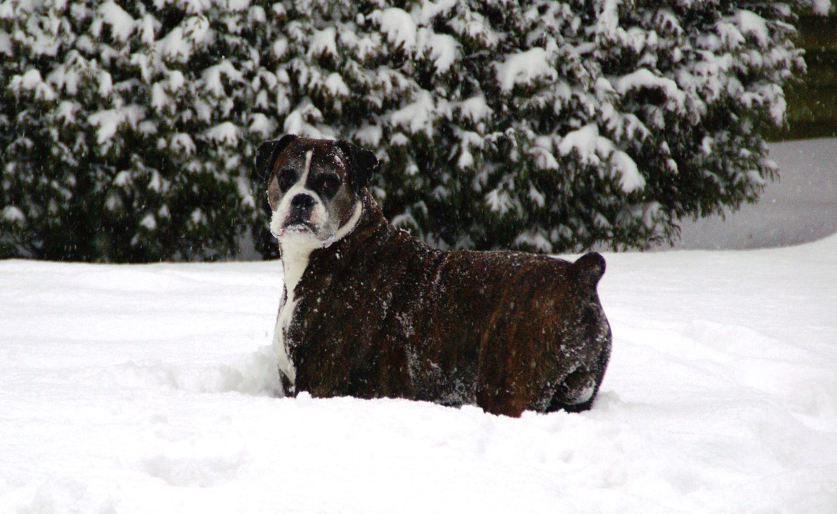 Bruce upto his chest in snow