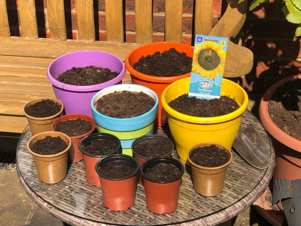 lots of assorted pots ready for sunflower seeds with a bench and a ratan table
