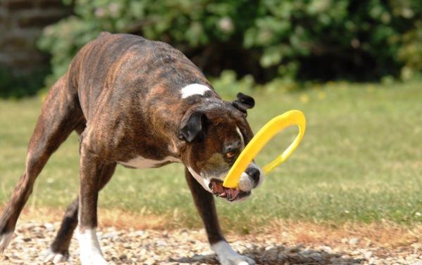 Bruce Frisbee