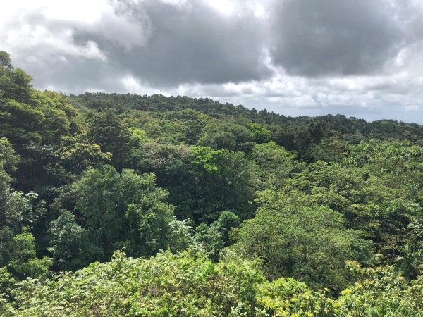 view over the huge rain forest