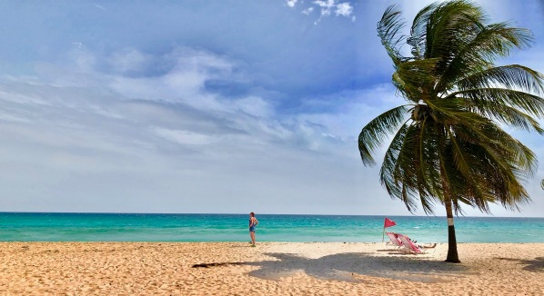 Dover beach with a palm tree on the far right