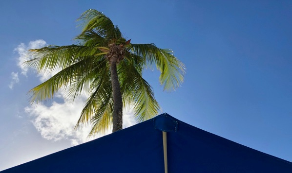 Palm tree in the sunshine  with the water tent in view
