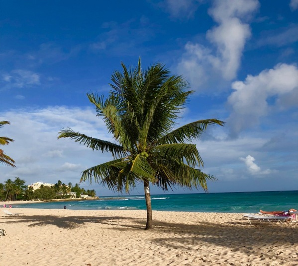 Palm tree on dover beach