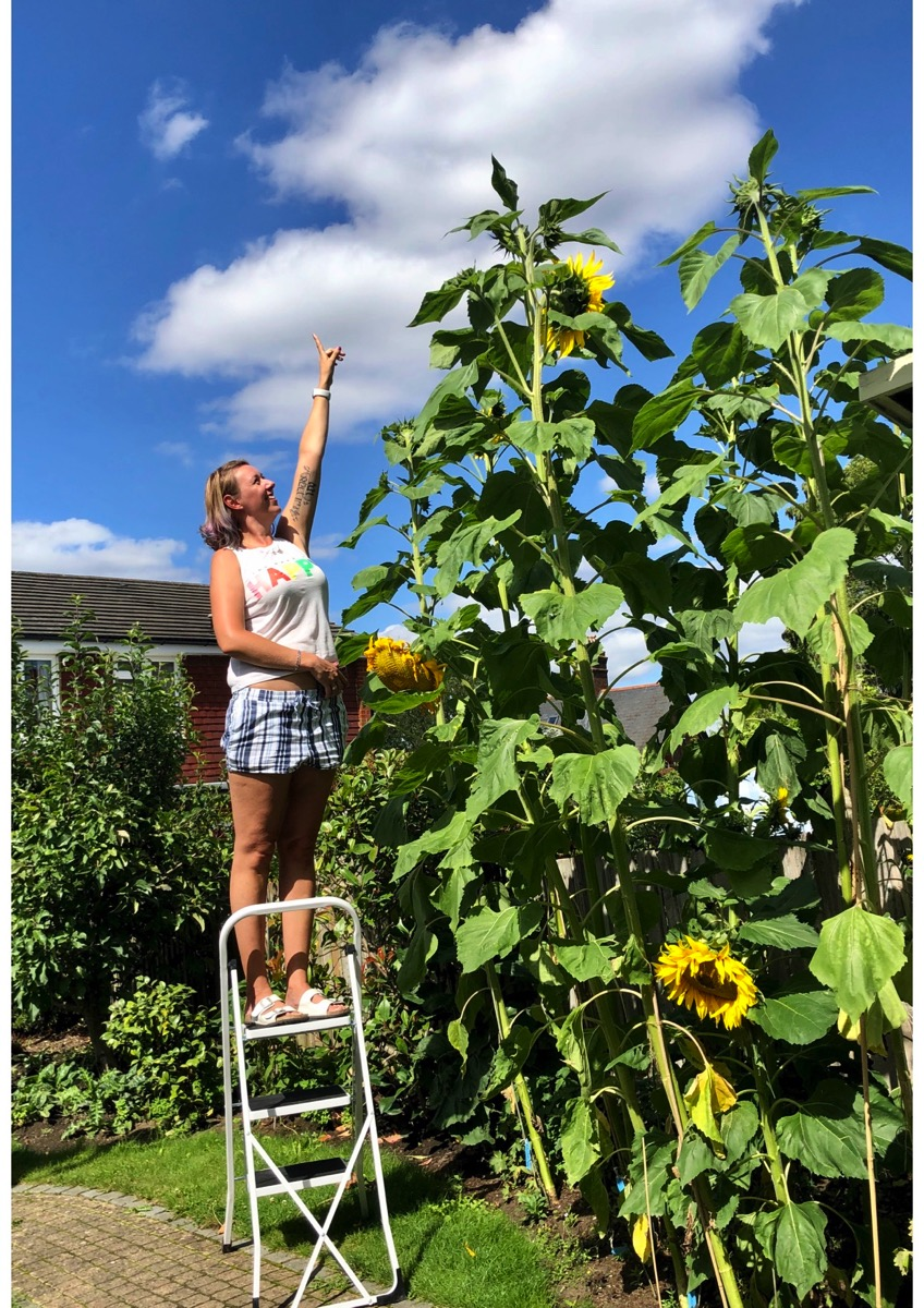 Dora measuring sunflowers